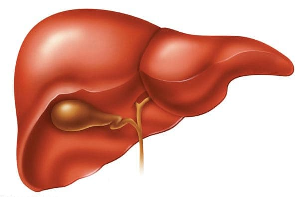 Image result for A Healthy Liver