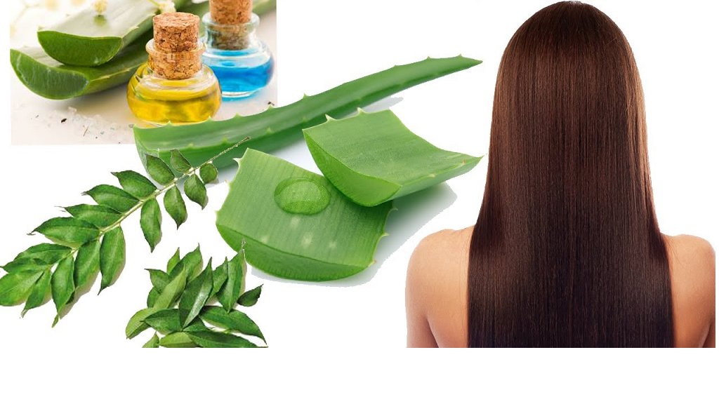aloevera for stop hair fall
