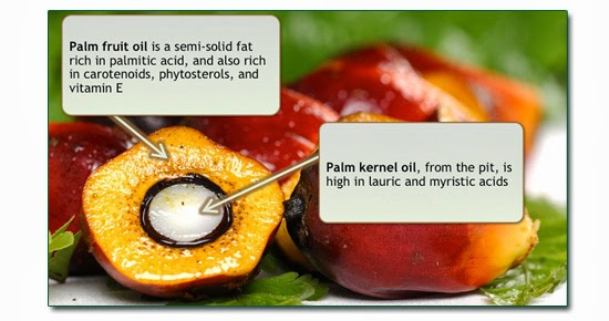 palm_fruit_and_oil
